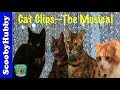 Cat Clips #100--THE MUSICAL Video