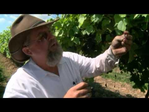 Adventure Arkansas: Post Wines