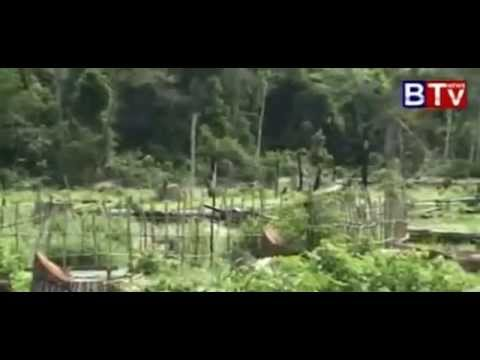 BTV News - Benefits of forest
