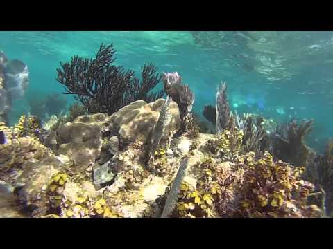 Gopro Snorkeling Cancun Mexico