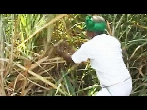 In Karnataka's sugar bowl, bitter protests by farmers over prices
