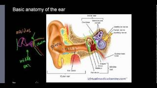 lecture 22 part 1 (Basic anatomy of ear, ossicles, choclea)