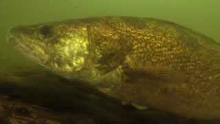 Aqua-Vu Presents High Definition Underwater Video!