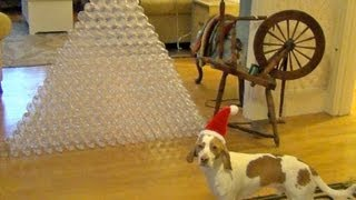 Best Dog Gift Ever -  Dog Receives 210 Bottles for Christmas: Cute Dog Maymo