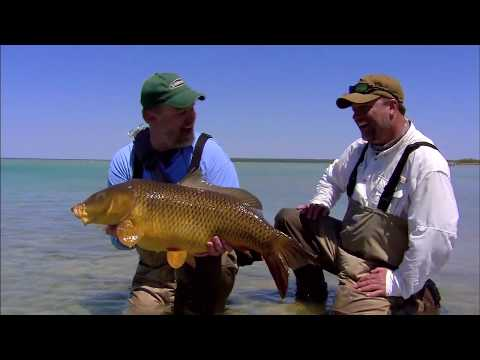Amazing Fly Fishing Carp Action!