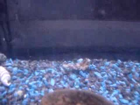 7 piranhas kill and eat frog