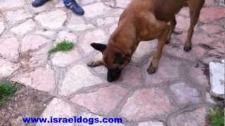 Israeldogs Grim- Apport of small metal articles (bullet shell and small coin)