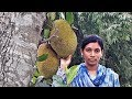 Kathaler Mojader Ranna | Traditional Raw Jackfruit Recipe Cooking By Street Village Food