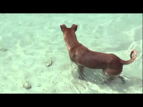Dog Fishing Pattaya Beach Koh Lipe Thailand Feb 2011 Thailand Tayland