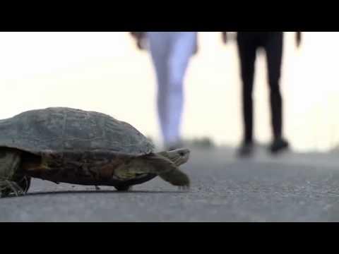 Zaur Emiraslanov  Yeni Klip Fraqment video