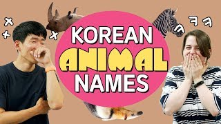 Funny Korean Animal Names - Can you guess the hidden meanings?