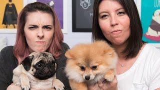 O que fazer com cachorro que brinca mordendo? - Karen Bachini