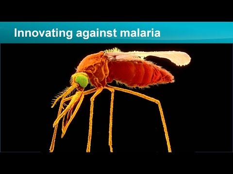 Our 30-year quest to develop a malaria vaccine