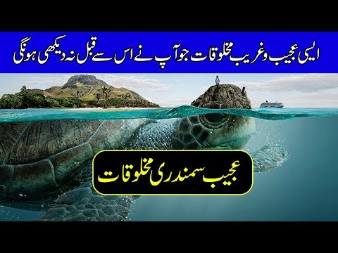 Mysterious Underwater Creatures Caught on Camera - Purisrar Dunya - Urdu Documentaries