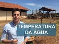 Qual a temperatura ideal da água para os bovinos