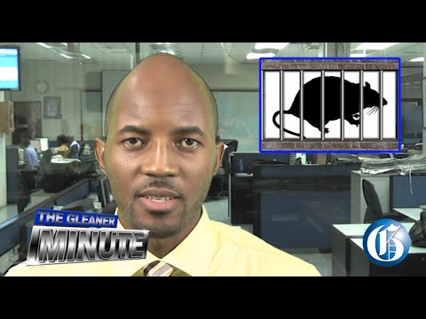 THE GLEANER MINUTE: Rat-infested lock-up closed... Jamaican extradited... Politics money woes