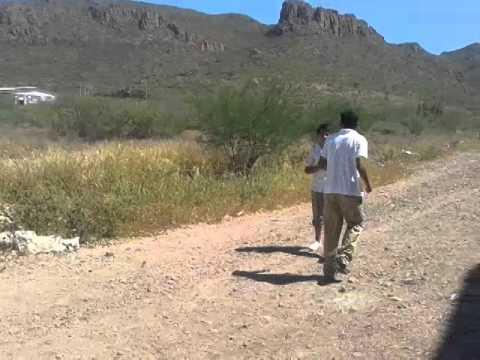 perro corriente vs uno mas corriente,  Guaymas