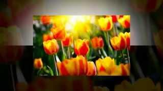 ★Поздравление★ - Поздравление с днем рождения подруге!Видео открытка