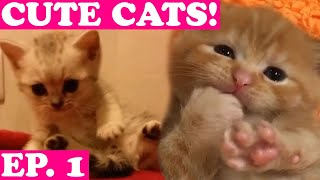 🐱 Cute Dog Videos Ep. 1 😍 Try Not to Cuddle Compilation 2019