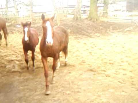 Konie filmiki