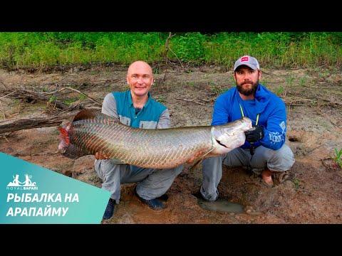 рыбалка ловля арапаймы