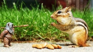 Top 10 Smartest Animals on Earth[HD]