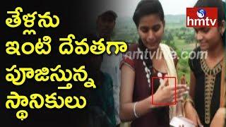 తేళ్లను ఒంటిపై వేసుకుని ఆడుకుంటున్న భక్తులు | Kandukuri Village | Karnataka | hmtv