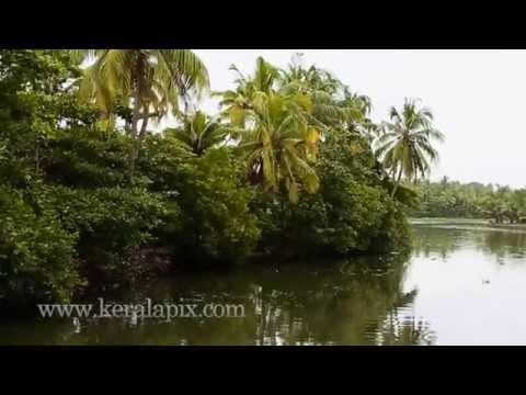 Backwaters of Kochi (Cochin) Part 1