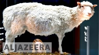 The scientific legacy of Dolly the sheep