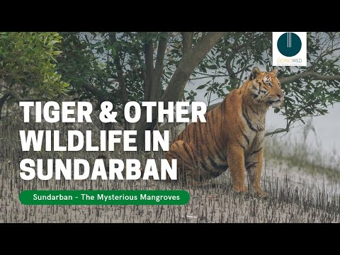 Sundarban - The mysterious Mangroves where Tigers rule - Part I