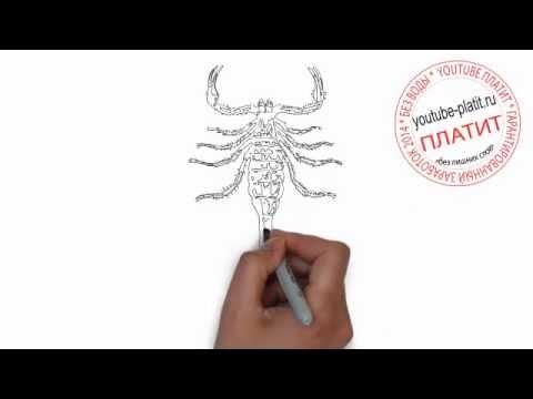 Видео как нарисовать скорпиона карандашом поэтапно
