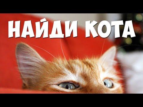 Найди кота, все выпуски 🐈 БУДЬ В КУРСЕ TV