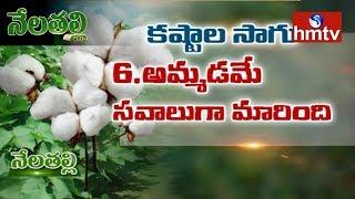 Nela Talli Special Focus On Cotton Cultivation Problems In Telangana - netivaarthalu.com