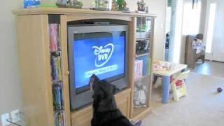 Dog hates Disney DVD's