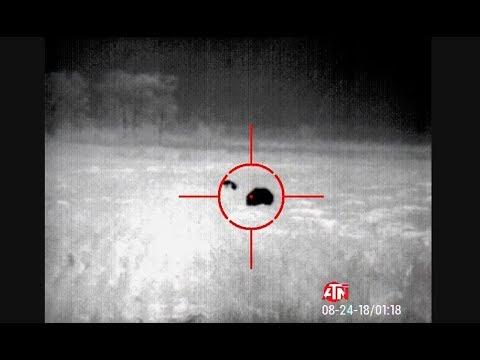 Night Stalking Hogs with Thermal Optics Gun Talk