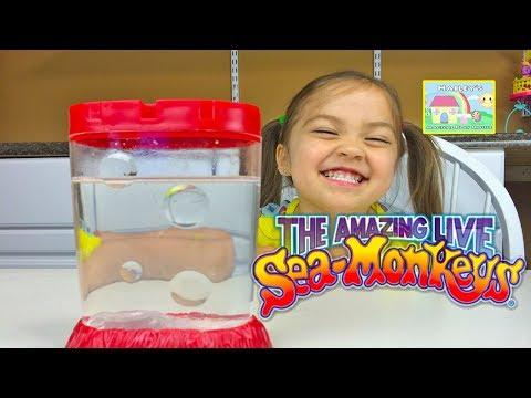 Sea monkeys watch