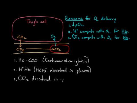 Hemoglobin moves O2 and CO2