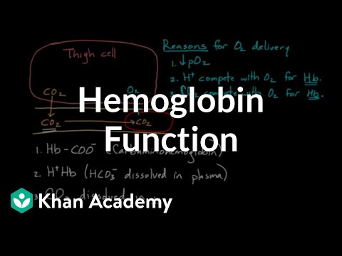 Hemoglobin moves O2 and CO2