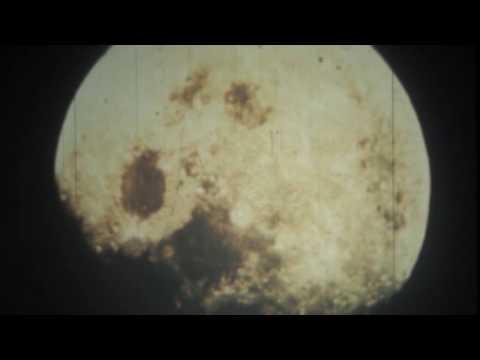 Black Flower - Lunar Eclipse