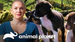 Familias adoptan a los cachorros de Eggo   Amanda al rescate   Animal Planet