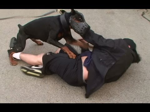 Doberman Attack Training (K9-1.com) Music Videos