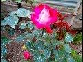 """""""Весна, весна... цветы, цветы"""". Лазаревское"""