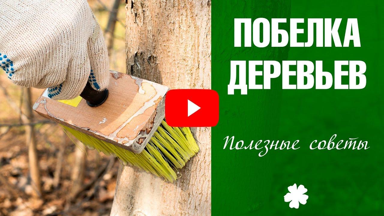 Побелка для деревьев как сделать 689
