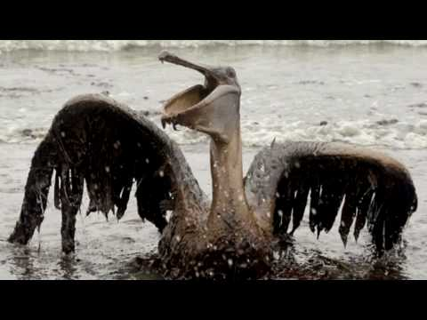 Black Tears:  The saddest video in the world - BP killed the planet - 2 years out and still dying