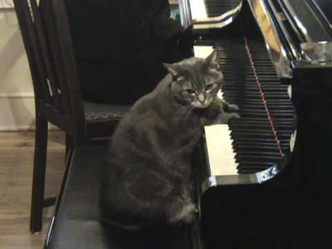 Nora The Piano Cat: A Holiday Greeting for 2008 Music Videos