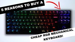 5 Reasons to Buy a CHEAP RGB Mechanical Keyboard!