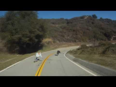 Bagidrop: California Series - Great Morning Runs #1