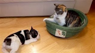 Dog Afraid Of And Cornered By A Cat