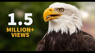 Inspiring Eagle story