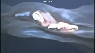 Unbekannte Kreatur im Ozean